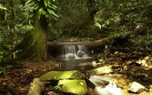 What activities did you do at the  Daintree rainforest?