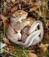 Squirle Hibernating