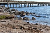 rivers that feed into Roanoke Sound Estuaries??