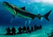 Aider à sauver l'océan!