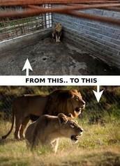 Big Zoos