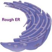 Rough E.R.
