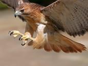 Equation for Hawk