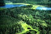 Boreal Forest - Canada