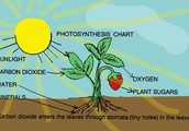 The process of photosynthesis is easy with a few steps.