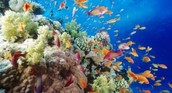 Benefits of the Great Barrier Reef