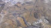 Pike spawning