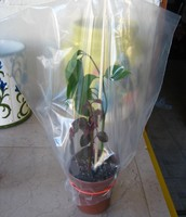 Plastic Bag Over Plant