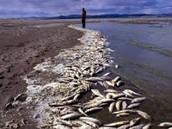 Acid Rain in the Great Lakes kills wildlife