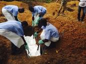 Ebola takes many