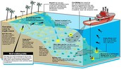 Diagram of How Coral Reefs Die