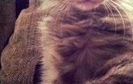 My kitten spanky :)