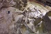 Mammoth skeleton found