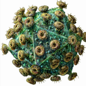 Virus Looks like.