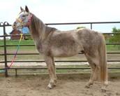 A Horse Called Takoda
