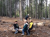 Forest Day Fun