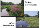 Before and After of Valley Restoration