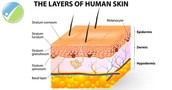 The layers of your skin. (Assuming you're human)