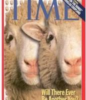 sheep clones