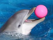 What is a dolphin trainer?
