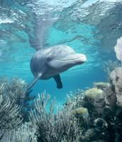 A dolphins habitat