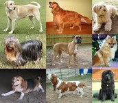 Dog Care