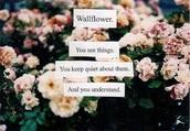 Wallflower (def.)
