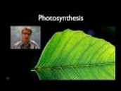 Photosynthesis and how it works