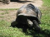 steve irwin turtle