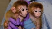 adorable twin monkeys