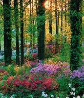 The flower forest