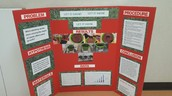 Components of Science Fair Project