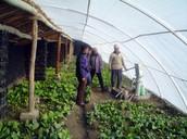 Binnenkant Greenhouse