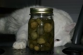 This Cat is in a Bit of a Pickle