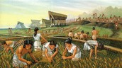 Early Farming