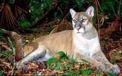 Animals in the Everglades