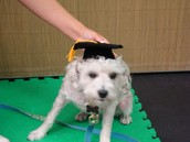 Choosing a sarasota Dog Day Care Company