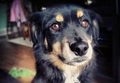 Buster Shuffle Pet Care LLC
