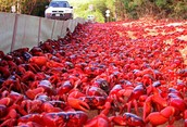 Economy & Main Industries of Christmas Island