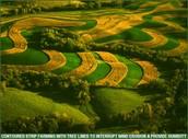 What is Contour Farming?