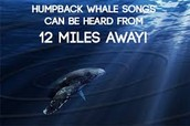 Interesting facts about whales