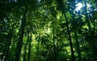 Indonesian Rain Forest