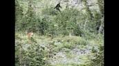 Bigfoot Hunt?