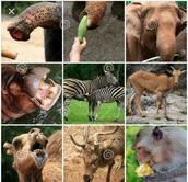 What makes them mammals