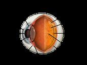 Eye anatomy.