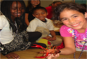 Elementary NextGen Science & Language Development Institute
