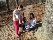 Students estimate the age of a tree.