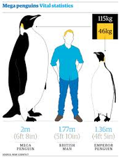 About The Emperor Penguin