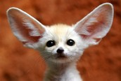 Ears (Structural change)
