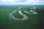 Amazon Forest/river